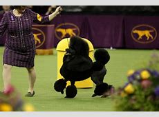 the national dog show 2020