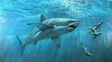 Gambar Nama Ikan Laut Gambarnya Terlengkap Hewan Gambar