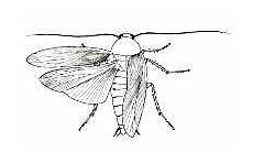 Biology Insects Structure And Function Information