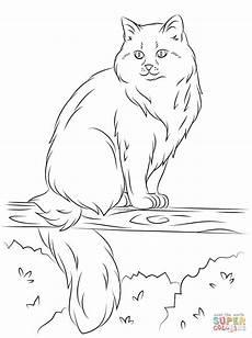 Katze Sitzend Malvorlage Sitting Cat Drawing At Getdrawings Free