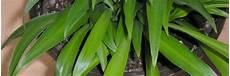 pflanzen gegen schimmel n 252 tzliche tipps gegen schimmel im blumentopf auf