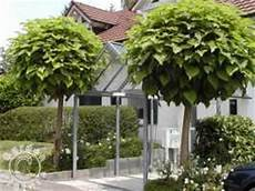 lijst met kleine bomen