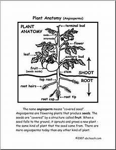 worksheets plant anatomy upper elem middle abcteach