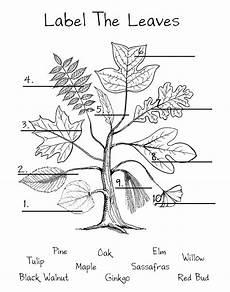 science worksheets leaves 12281 1 bud 2 elm 3 maple 4 black walnut 5 willow 6 tulip 7 oak 8 sassafras 9 pine 10 g