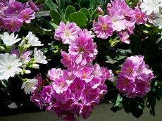 Welchen Namen Hat Diese Im Mai Bl 252 Hende Pflanze Auf Den