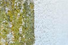 algen am haus entfernen algen entfernen wie sie ihre fassade richtig reinigen