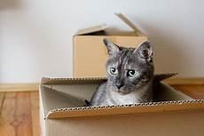 imke kurtz katzenpsychologe tipps zum umzug mit der katze