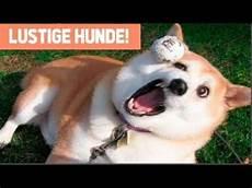 Lustige Bilder - lustige hunde zum totlachen 2018 lustige