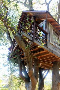 livable tree house plans house plans treehouse plans for inspiring unique rustic