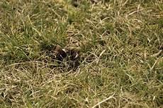 Rasen Ist Verbrannt Und Vertrocknet Was Tun Ursachen