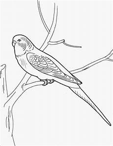 Malvorlage Papagei Einfach Ausmalbilder Malvorlagen Papagei Kostenlos Zum
