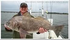 Foto Orang Mancing Dapat Ikan Besar Gambar Akuntt