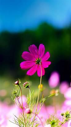 nature flower desktop wallpaper pink flower wallpaper background 55 images