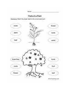 types of plants worksheets for grade 2 13744 what do plants make worksheet with images plants worksheets science worksheets parts of a