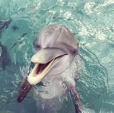 Malvorlagen Unterwasser Tiere Lustig Freeanimals Againstzoos Tiere Unterwasser Und Dachshunde