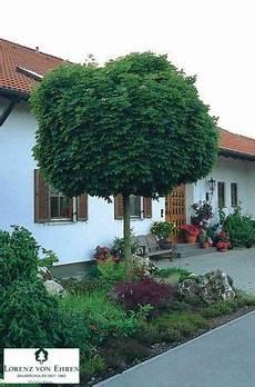 arbre pour petit jardin 6 arbres qui sont vraiment adapt 233 s pour un petit jardin