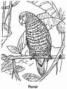 free printable parrot coloring pages for animal place