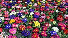 Pflanzen F 252 R Den Fr 252 Hlings Balkon Welche Blumen K 246 Nnen