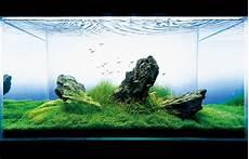 ada aquascape seahorse aquariums now suppling ada in ireland