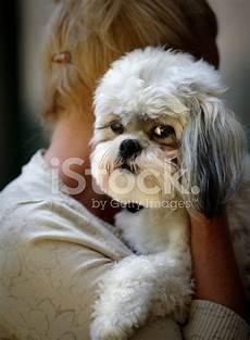 candele auto chion femme embrasse chien shih tzu photos freeimages