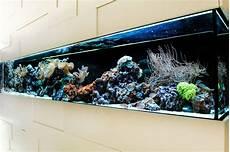 aquarium als raumtrenner das aquarium als raumteiler