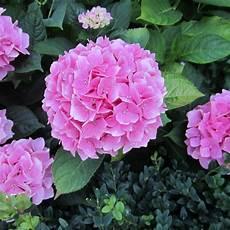 Kennt Jemand Diese Sch 246 Ne Blume Garten Blumen