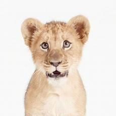 Koleksi Gambar Anak Haiwan Haiwan Yang Sangat Comel