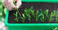 vermehrung pflanzen richtig vermehren mein sch 246 ner garten