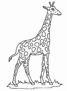 konabeun zum ausdrucken ausmalbilder giraffe 17772