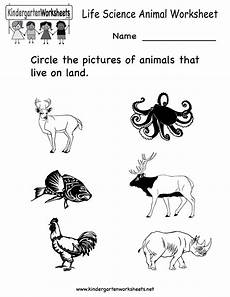 worksheets in science kindergarten 12240 12 best images of animal worksheets for kindergarten free kindergarten science worksheets