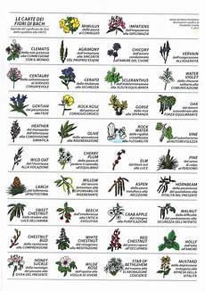 38 fiori di bach carte dei fiori di bach e ursella e moira rostellato