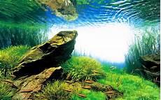 amano aquascape takashi amano creator of the nature aquarium