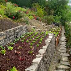 Vegans Living The Land Gardening On A Hill Bank