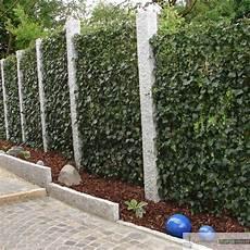 efeu sichtschutz selber machen sichtschutz efeu 12 asenbauer naturstein