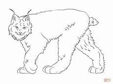 canadian animals coloring pages 16927 dibujo de lince canadiense caminando para colorear dibujos para colorear imprimir gratis