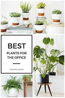 best plants for an office what are the best office plants top plants for your desk