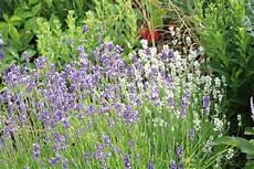 K 252 Belpflanzen F 252 R Die Terrasse Bei Wenig Wasser Volle
