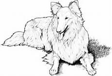 Ausmalbilder Hunde Border Collie Ausmalbild Collie Ausmalbilder Kostenlos Zum Ausdrucken