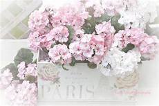 ste antiche fiori shabby chic flower prints pink white flowers decor