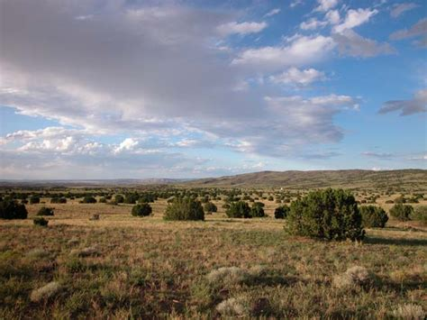 37.03 Acre Ranch In The White Mountains Of Arizona