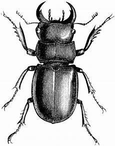 Jugendstil Malvorlagen Lernen Bockk 228 Fer Mit Bildern Insektenkunst K 228 Fer