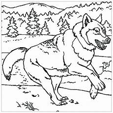 wolf to print wolf coloring pages