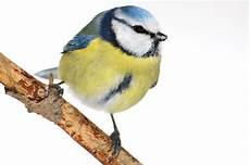 Ganzjahresf 252 Tterung Kein Mittel Gegen Vogelschwund Nabu
