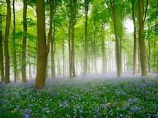 5 Hutan Dengan Keindahan Paling Luar Biasa Berjambang
