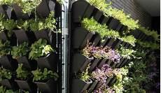 vertikale begrünung selber machen living walls butterflies welcome f 252 r eine bessere welt