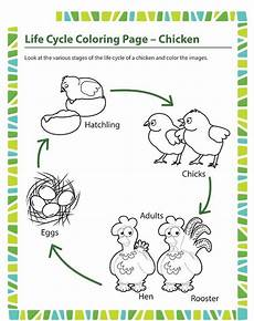 animal cycle worksheets 13938 animal cycle worksheet for crafts and worksheets for preschool toddler and kindergarten