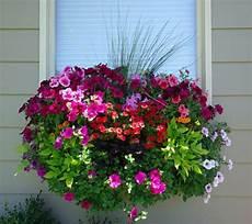 balkonkästen bepflanzen ideen blumenkasten f 252 r balkon wunderbare blumen garten und