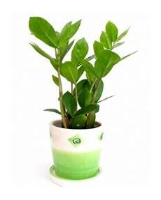 giftige zimmerpflanzen baby dress up your home with these indoor plants that don t