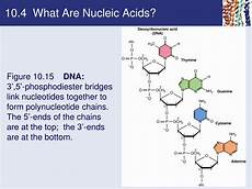 ppt chapter 10 nucleotides and nucleic acids powerpoint presentation id 458329