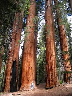 Eqoi7a sequoia np mcneilorama